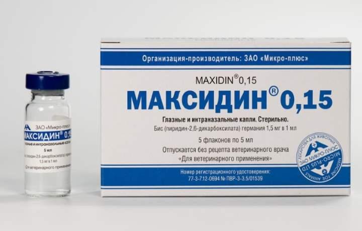 Ампула препарата максидин