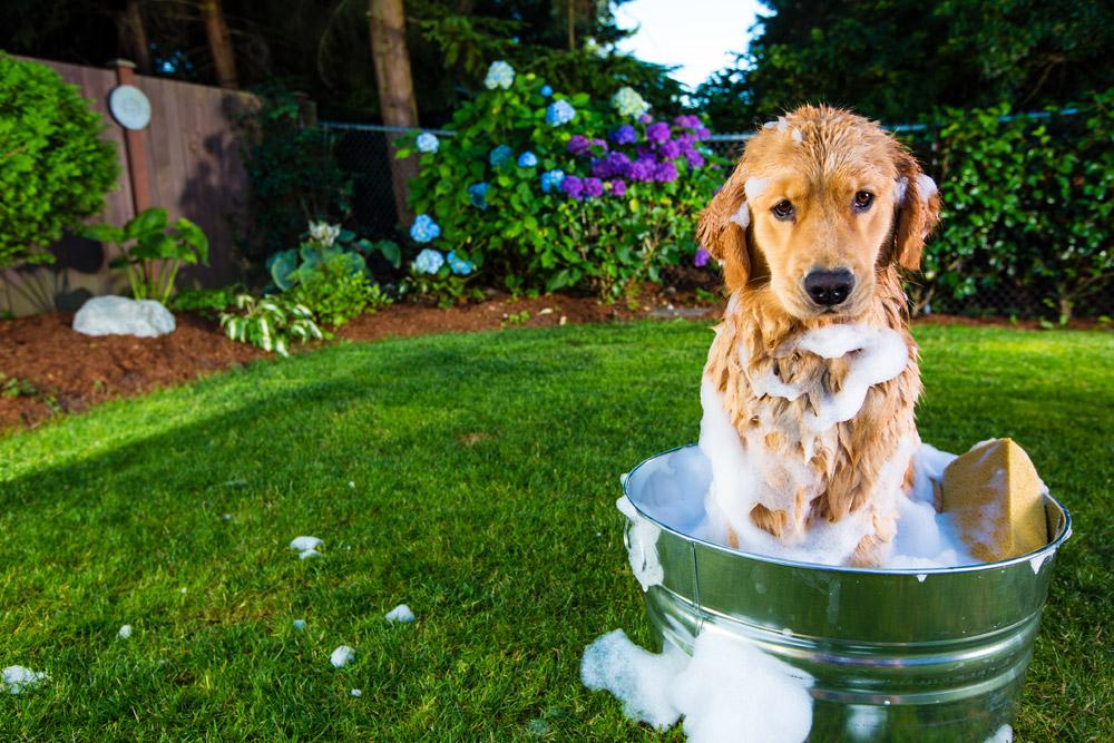 Собака, купающаяся в ведре