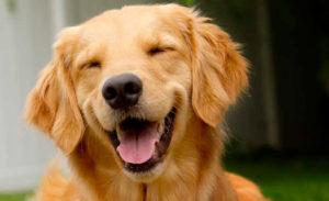 за и против кастрации собак