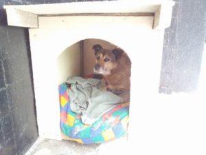 собака не спит в будке