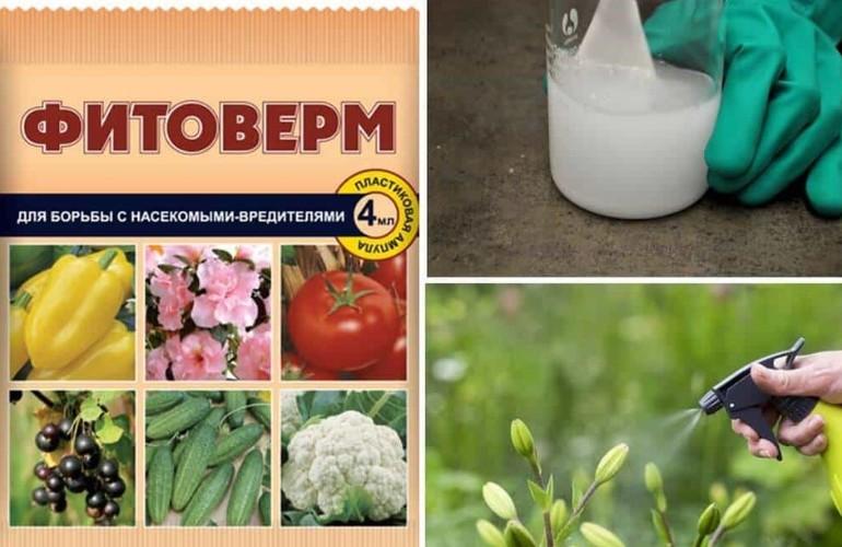 фитоверм инструкция для комнатных растений
