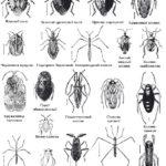 Как выглядят различные клопы и другие насекомые