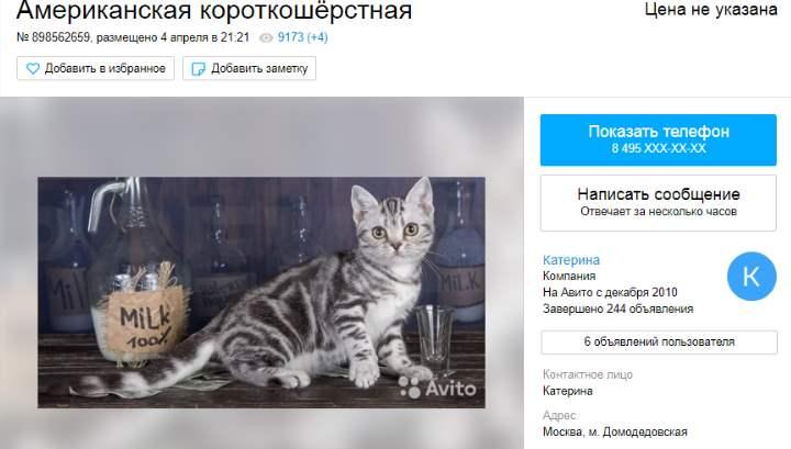 Цена этих редких пока для России кошек довольно высока