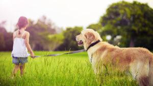 аллергия и собаки