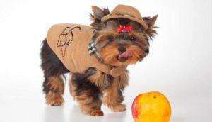 клички на букву н для маленьких собак