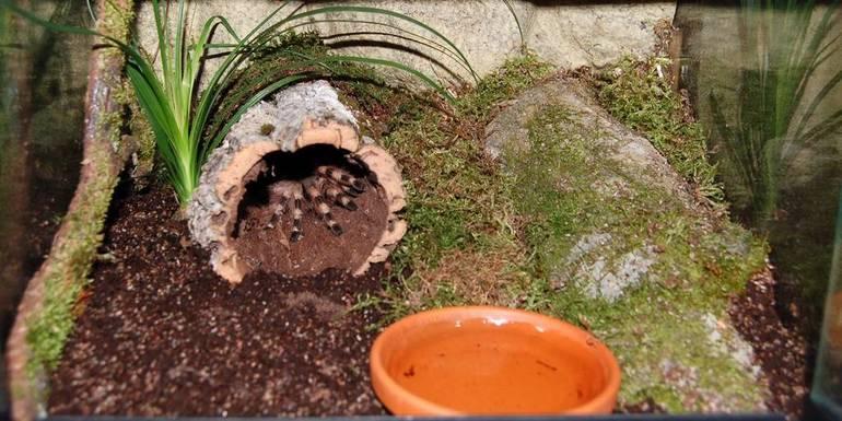Террариум для древесных птицеедов