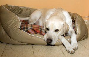 первая неделя беременности собаки