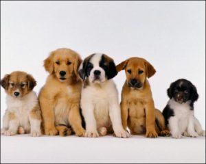 определение породы собаки с помощью сервисов