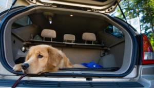аксессуары для перевозки собак в автомобилях
