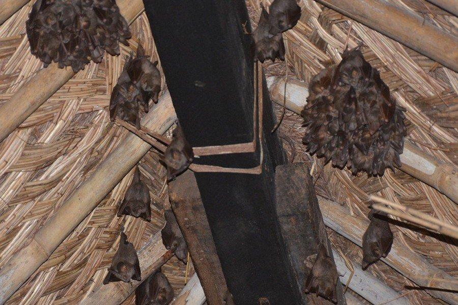 Стая мышей на чердаке