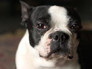 рак у собак симптомы