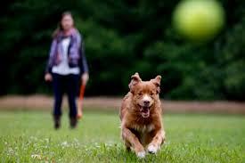 правила поведения собак и владельцев