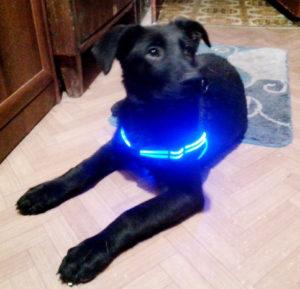 светящиеся шлейки для собак
