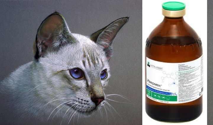 Способ применения и дозировку «Ивермек» выбирают в зависимости от выбранной формы лекарства.