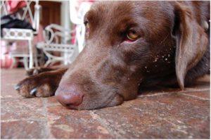 как вызвать рвоту у собаки