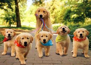 клички собачьи