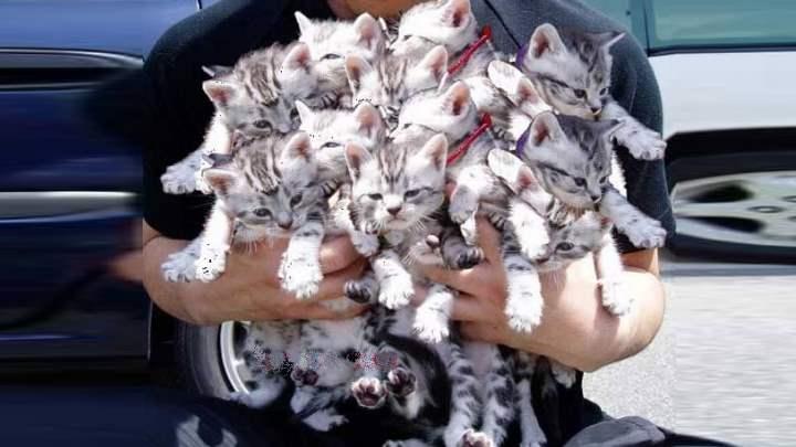 Много хорошеньких котят
