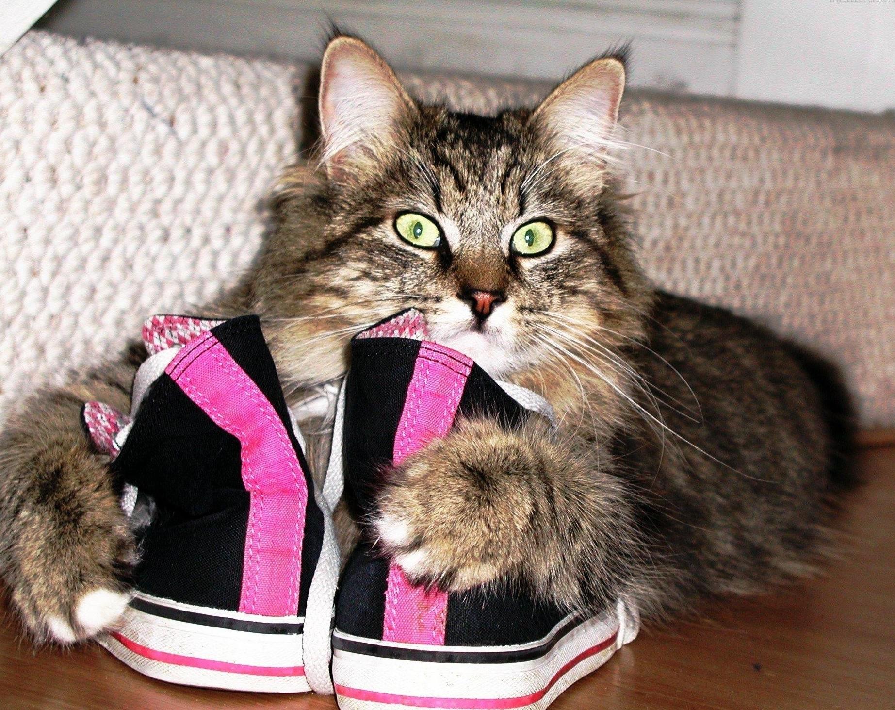 Кошка, лежащая возле обуви