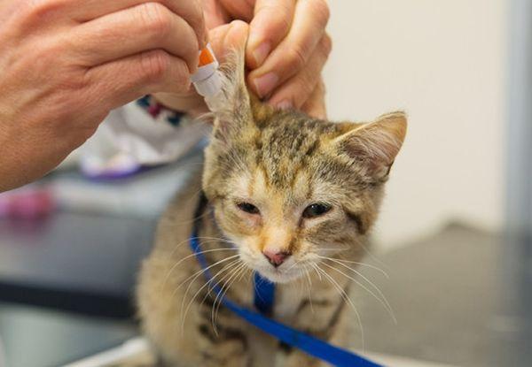 Лишь своевременное лечение может полностью излечить кошку