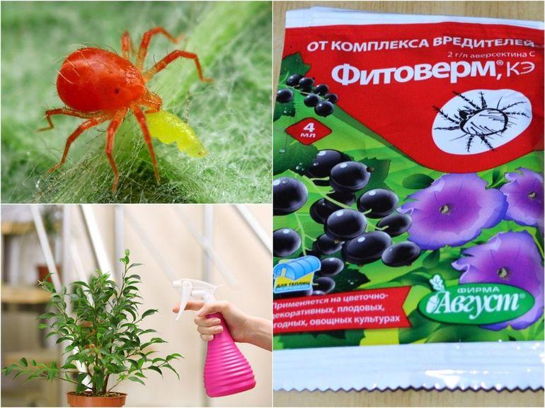 Фитоверм применение для комнатных растений