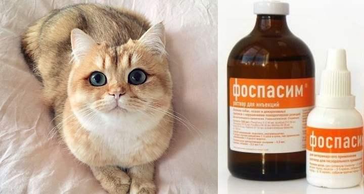 Лечение нервных кошек