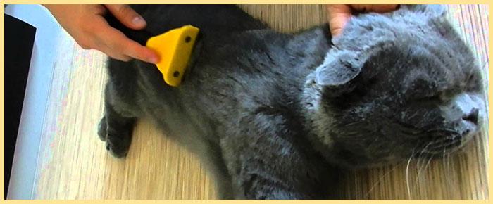 ВЫчесивание кошки фурминатором