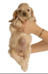 грыжа у собак