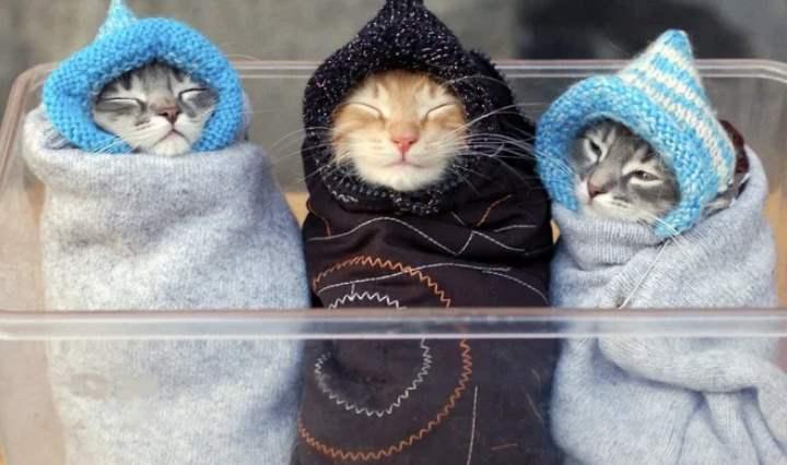 Котята в одеялах