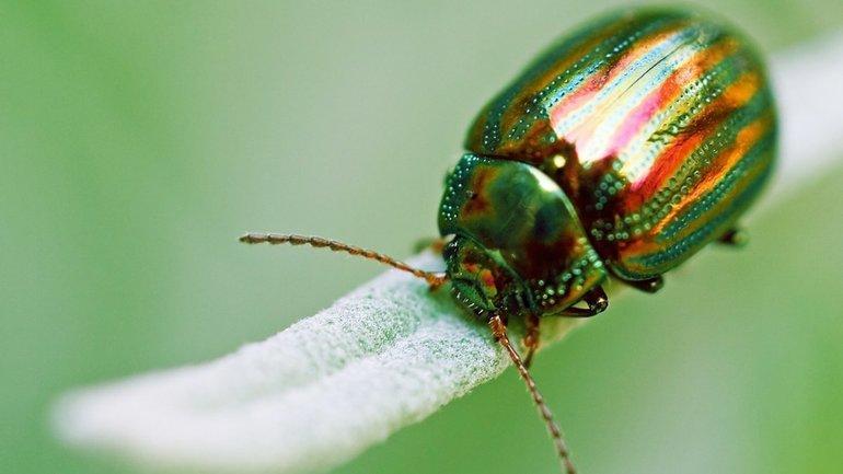 Особенности каждого вида майских жуков