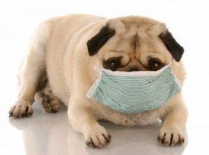 кашель у собак