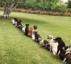 приобщение собаки к улице