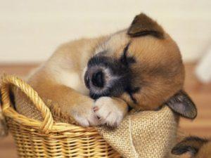 как вывести блох у собак народными способами