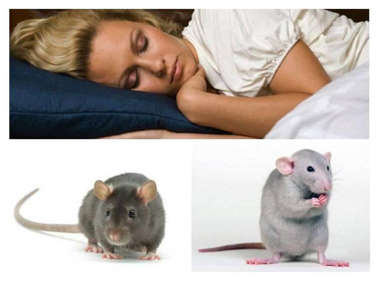 О чем скажет сон про мышей