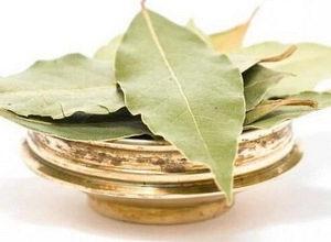 Эффективно ли лечение цистита лавровым листом?