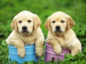 существующие популярные породы собак