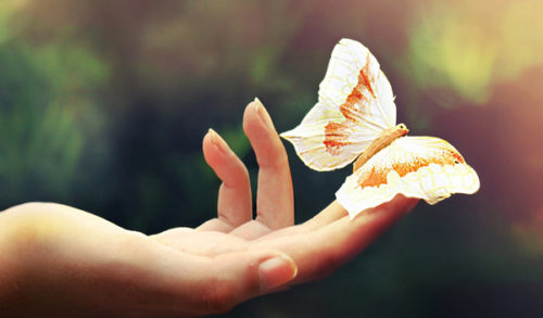 Бабочка сидит на пальце