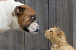 Собаки или кошки – кто умнее? Исследования Обзор +Видео