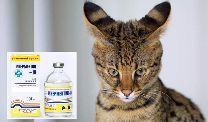 у животного начинаются судороги, стоит обратиться к врачу