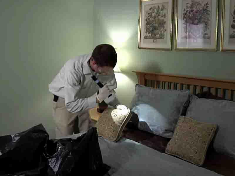 Поиск паразитов в квартире