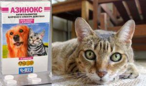Азинокс для кошек: эффективная борьба с паразитами и вызываемыми ими болезнями +Фото и Видео