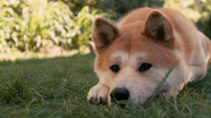дерматит у собак лечение