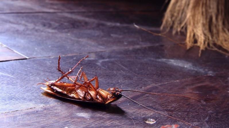 Таракан после употребления геля