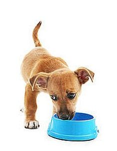 нормы кормления собак