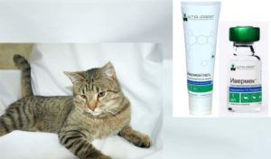 Ивермектин для кошек: показания к применению и формы выпуска +Фото и Видео
