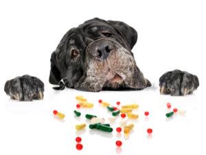 дегельминтизация у собак