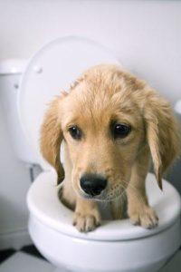 запор у собаки симптомы