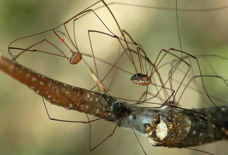 Прочие виды домашних пауков
