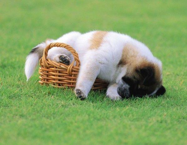 Собаку необходимо защитить от блох и клещей