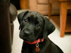 плохая температура у собак