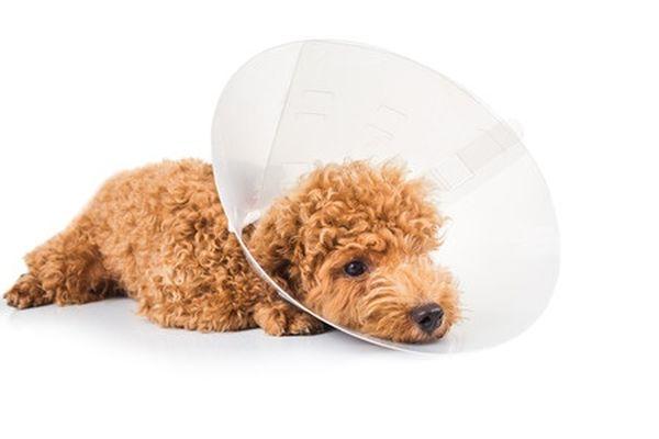 Если не лечить собаку, она может умереть